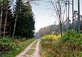 Waldweg09.jpg
