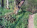 Wanderweg entlang der Wässernach.JPG