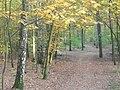 Wannsee - Berliner Forst (Berlin Forest) - geo.hlipp.de - 29866.jpg