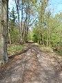 Weg an der Westseite des Hirschgrabens - geo.hlipp.de - 18024.jpg