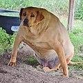 Wide dog.jpg