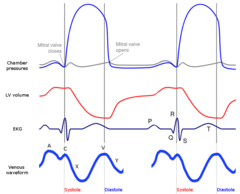 Wiggers diagram wikiwand wiggers with jugular venous waveform ccuart Image collections