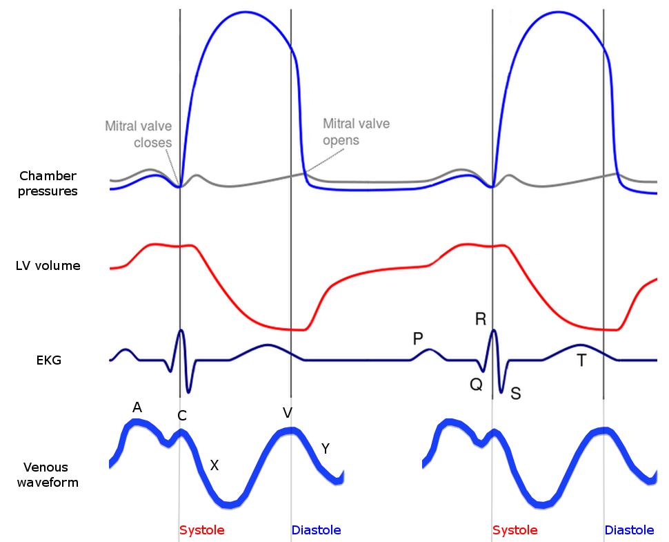 Wiggers diagram howling pixel wiggers diagram with jugular venous waveform ccuart Images