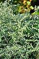 Wikipedia 13. Fotoworkshop Botanischer Garten Erlangen 2013 by-RaBoe 074.jpg