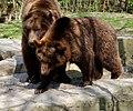 Wildpark Bad Mergentheim. Schmusebären.jpg