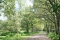 Wimbledon Common - Footpath - geograph.org.uk - 1339765.jpg