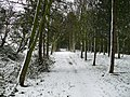Winter Bridlepath, Brook End. - geograph.org.uk - 953015.jpg