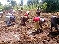 Women Planting Onions 05.jpg