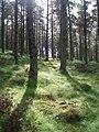 Woodland, Tulloch Hill. - geograph.org.uk - 460762.jpg