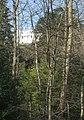 Woodland at Norbury Park - geograph.org.uk - 358071.jpg