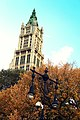 Woolworth Building in fall.jpg