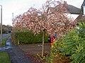 Wyngate Road, Cheadle Hulme - geograph.org.uk - 13988.jpg
