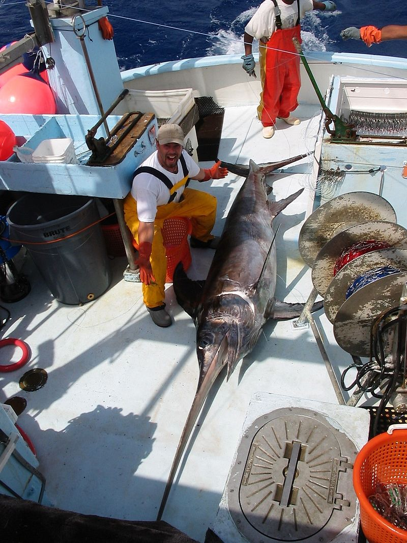 the problems with the fishing of swordfish