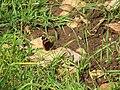 Yagur – Nesher, the Green Path – Mount Carmel 090.JPG