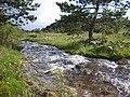 Yeşil Doğa... - panoramio.jpg