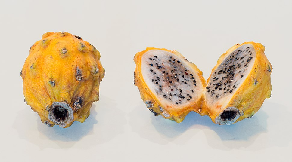 Yellow dragon fruit (50831s)