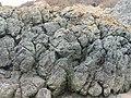 Ynys Llanddwyn - geograph.org.uk - 750083.jpg