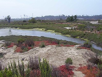 Los Cerritos Wetlands - Los Cerritos Wetlands, Zedler Marsh