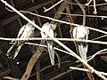 Zoo des 3 vallées - Animaux - 2015-01-02 - i3259.jpg