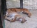 Zoo in Yalta 005.jpg