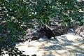 Zoologická zahrada Tábor - Větrovy (40).jpg