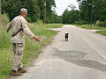 'Man's Best Friend' Helps Sniff Out improvised explosive devices DVIDS171984.jpg