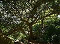 (1)Wendy Whiteleys Garden 043a.jpg