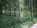 (PL) Polska - Warmia - Las Miejski w Olsztynie - The City Forest in Olsztyn (28.VIII.2012) - panoramio (17).jpg