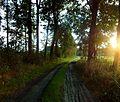 Ścieżka - panoramio (4).jpg