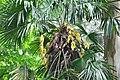 Грузия, ботанический сад - panoramio (2).jpg