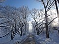 Дорожка вдоль озера Бельское 1.jpg