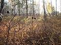 Золотая осень на Южном Урале (3) - panoramio.jpg