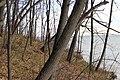 Лес на побережье Волги. Ундоры. Ульяновская обл. Ноябрь 2013 - panoramio.jpg