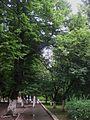 Мукачеве сквер лікарні (5).jpg