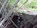 Родник голубой глины - panoramio.jpg