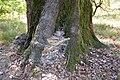 Старое дерево. Хутор Веселый. Фото Виктора Белоусова. - panoramio.jpg