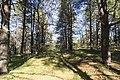 Хвойний квартал лісу.jpg