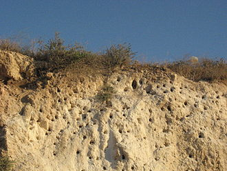 Bee-eater - Bee-eater nesting cliff in Modi'in, Israel