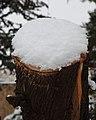 שלג מקבל לעתים את צורת הדבר שמתחתיו (8366328795).jpg