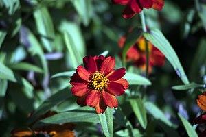 عکس از گلها و گیاهان باغ بوتانیکال تفلیس - گرجستان 27.jpg