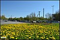 گلهای طبیعی در میدان 22بهمن - panoramio.jpg