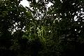 রেমা-কালেঙ্গা ০৩.jpg