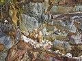 馬屎州岩石4.jpg