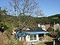 감나무가 있는 농촌 주택 - panoramio.jpg