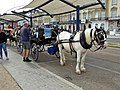 -2018-08-14 Horse drawn carriages on Marine Parade, Great Yarmouth.jpg