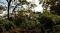 ... along Bisle Ghat (30948405620).jpg