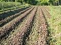 0581jfLandscapes Roads Vegetables Fields Binagbag Angat Bulacanfvf 12.JPG