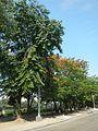 08449jfIntramuros Anda Circle Bonifacio Drive Port Area Manilafvf 42.jpg