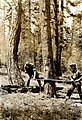 1922. Felling bark beetle infested ponderosa pine for treatment. SONC beetle control project. (32765043274).jpg