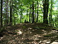 2012 Pfälzerwald 179 Kesselberg Gipfel.jpg